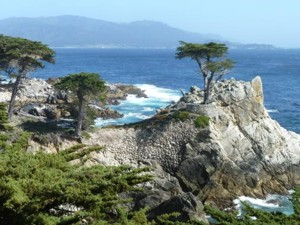 Lone Cyprus along 17 Mile Drive